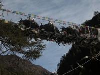 Yaky v udoli Solu Khumbu